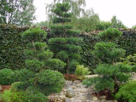 Japanischer Garten Bäume