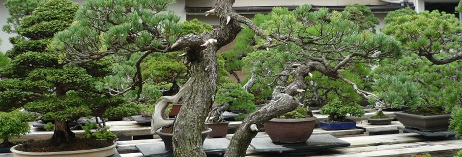japanischer garten bonsai video youtube. Black Bedroom Furniture Sets. Home Design Ideas